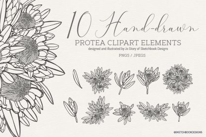10 hand drawn Protea clipart elements