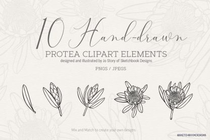 Protea Hand drawn Set