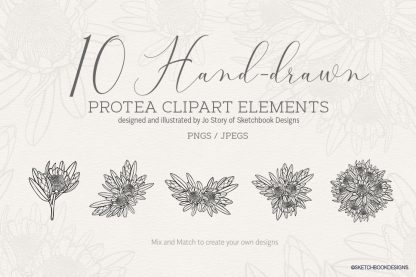 Hand drawn Protea Digital Set