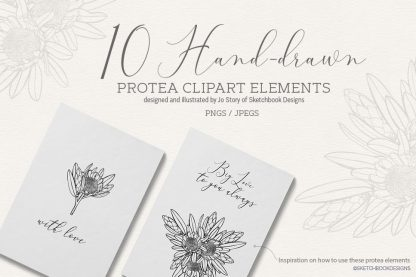 Hand drawn Digital Protea Set